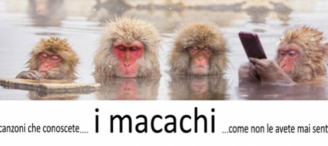 macachi
